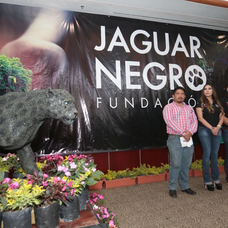 jaguar-negro-5