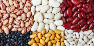 En México hay 35 variedades de frijol reconocidas por el INIFAP